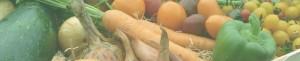 Création et entretien de potager carré potager