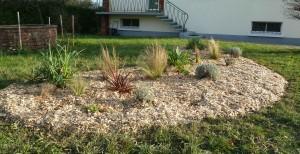 Plantation de graminées avec paillage