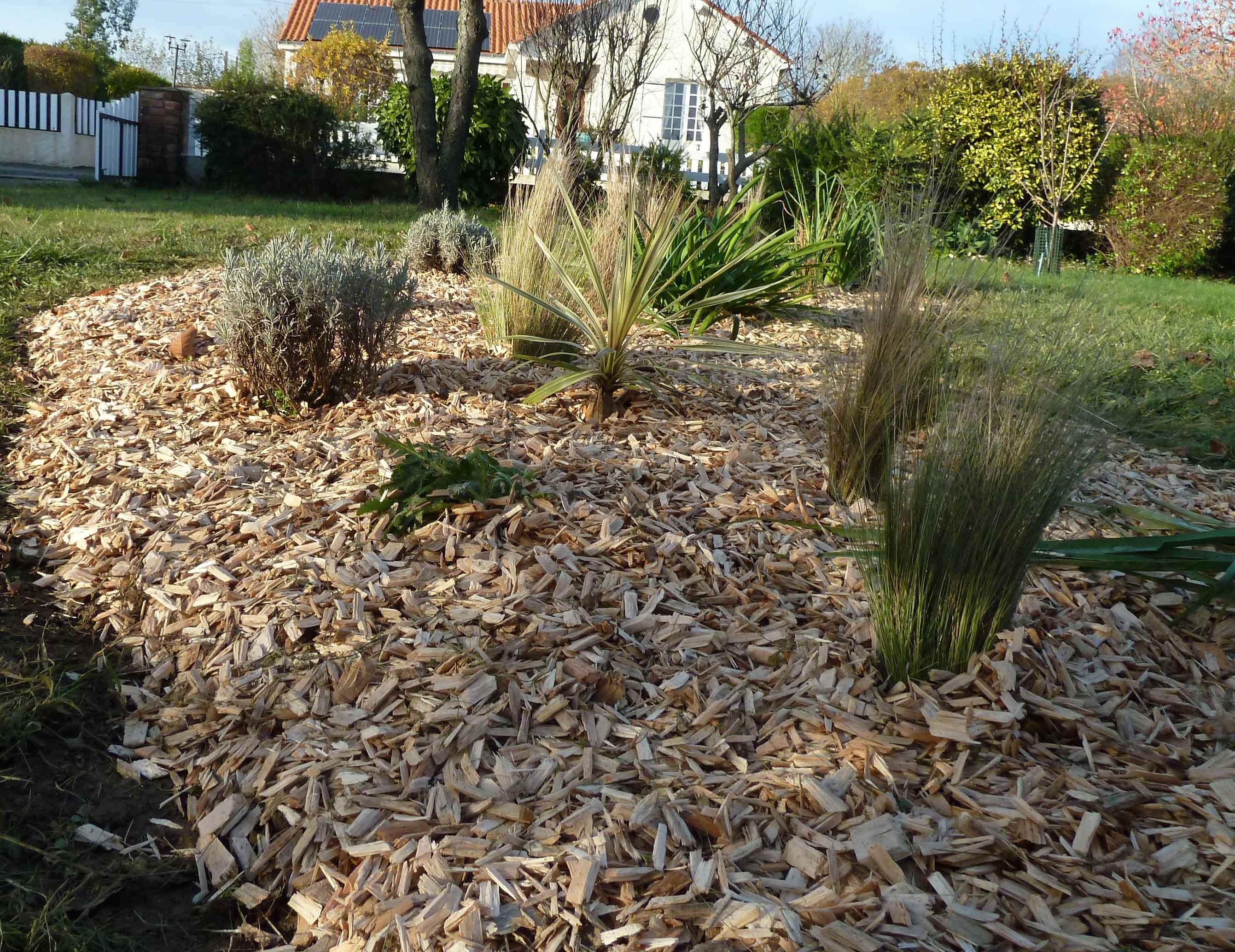 Massif de gramin es avec paillage bois o 39 bio potager - Copeaux de bois jardin ...