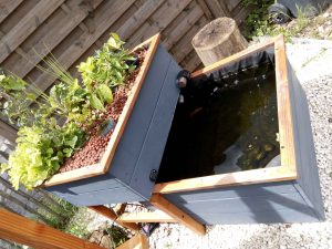 Carré potager aquaponique bassin aquaponique, bassin aquaponie