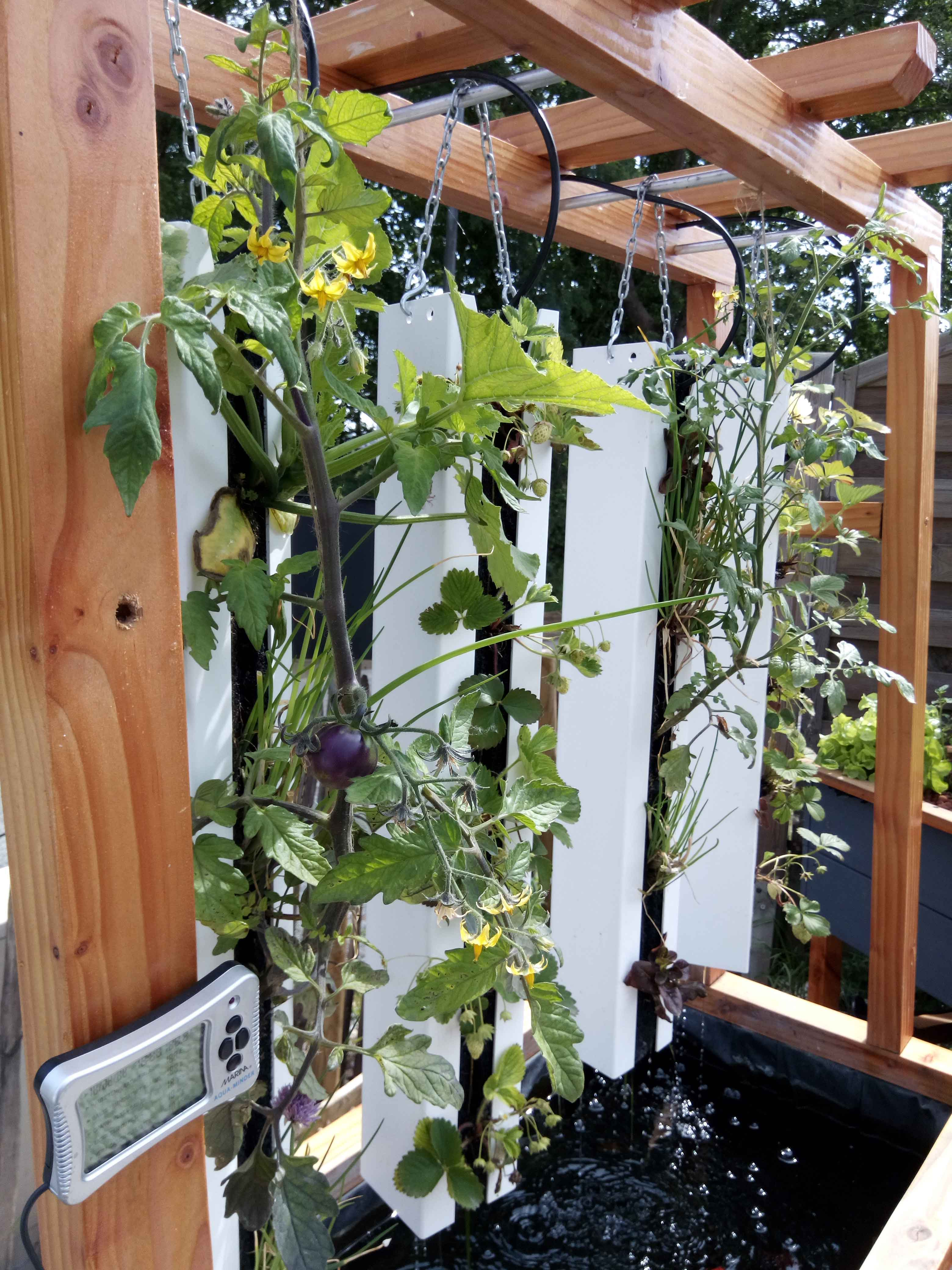 aqua potager vertical potager aquaponie o 39 bio potager. Black Bedroom Furniture Sets. Home Design Ideas