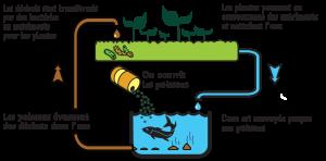 Schéma aquaponie, aquaponie nantes, logo aquaponie, potager en aquaponie, module aquaponique